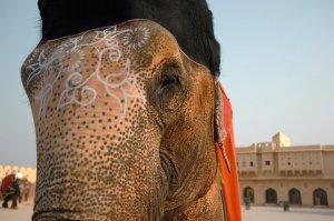 India Elephant G Adventures